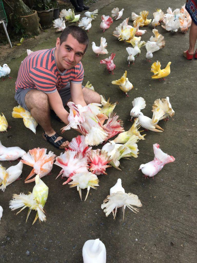 птицы парайдаз парк